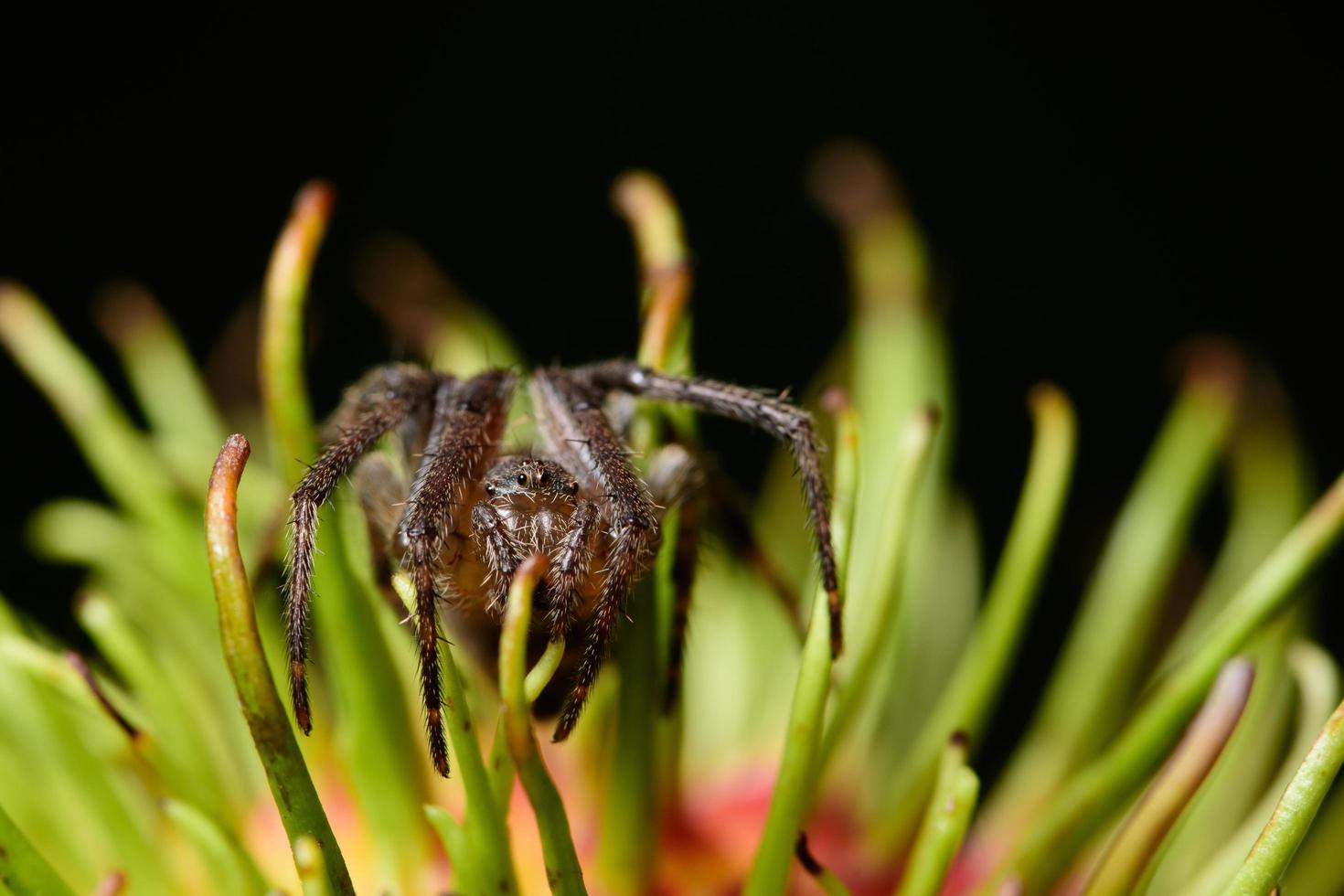 ragno macro su un fiore foto