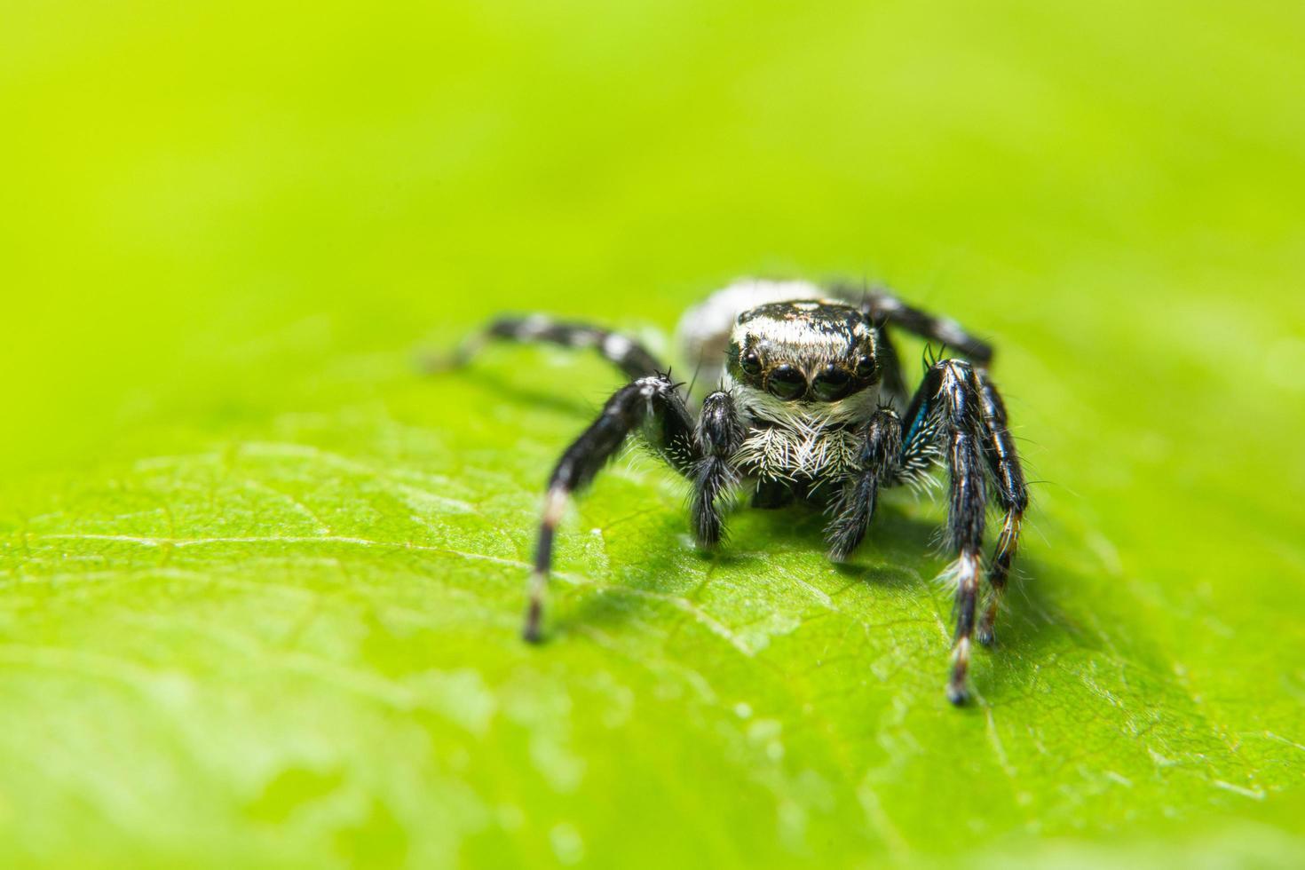 ragno su una foglia verde foto