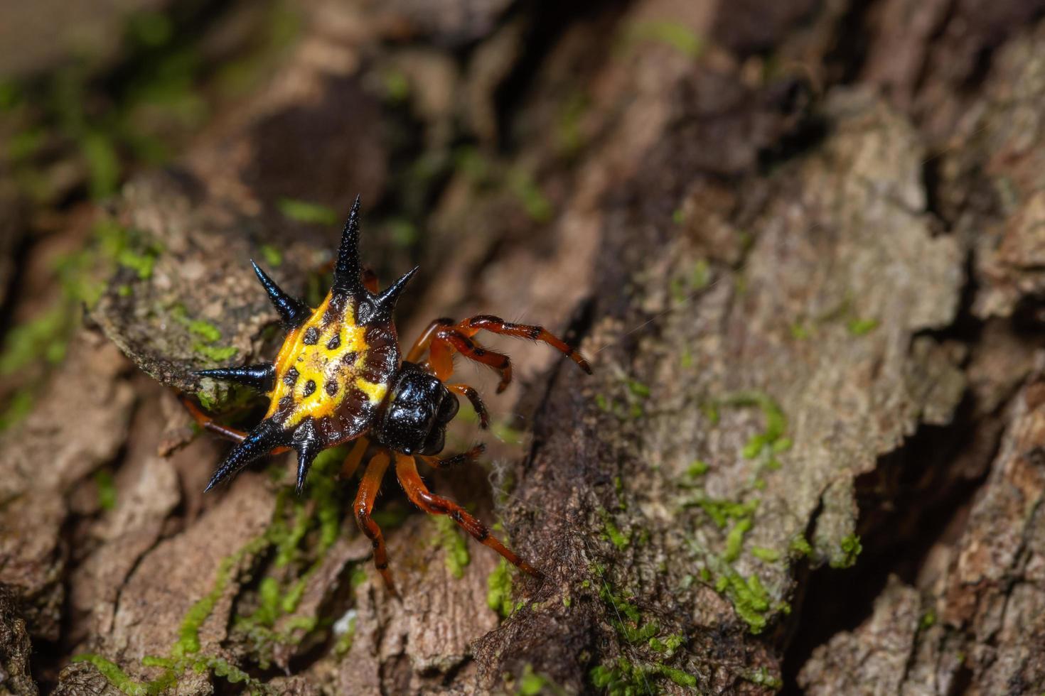 ragno su un albero foto