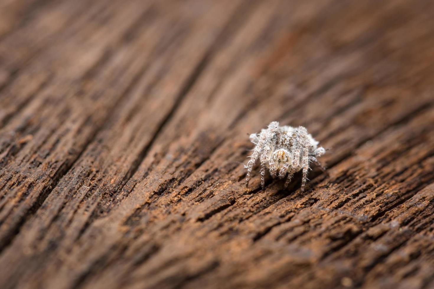 ragno su un albero, primo piano foto