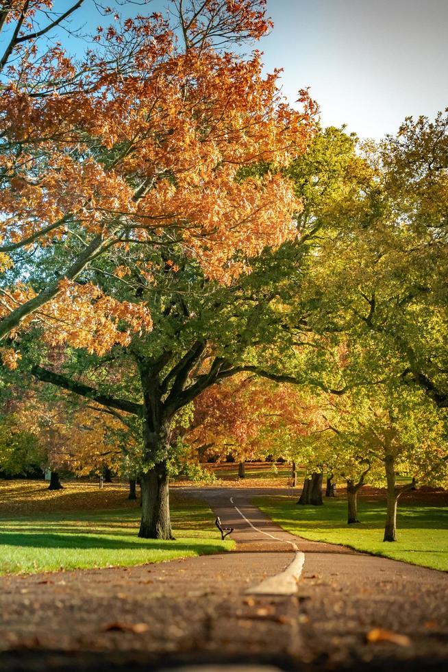 sentiero nel parco foto
