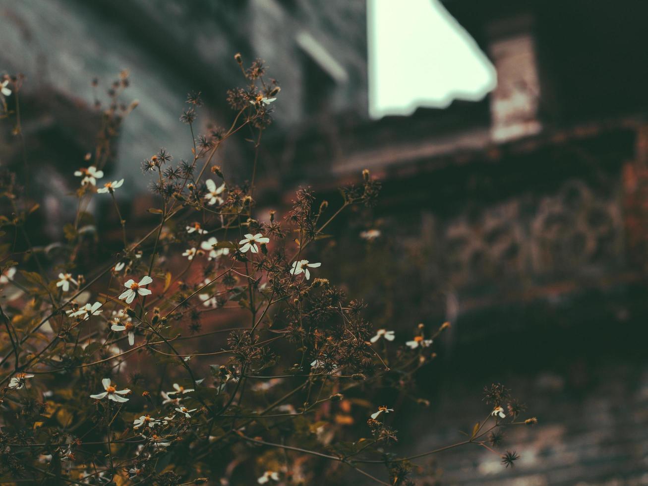 messa a fuoco selettiva di piccoli fiori autunnali foto