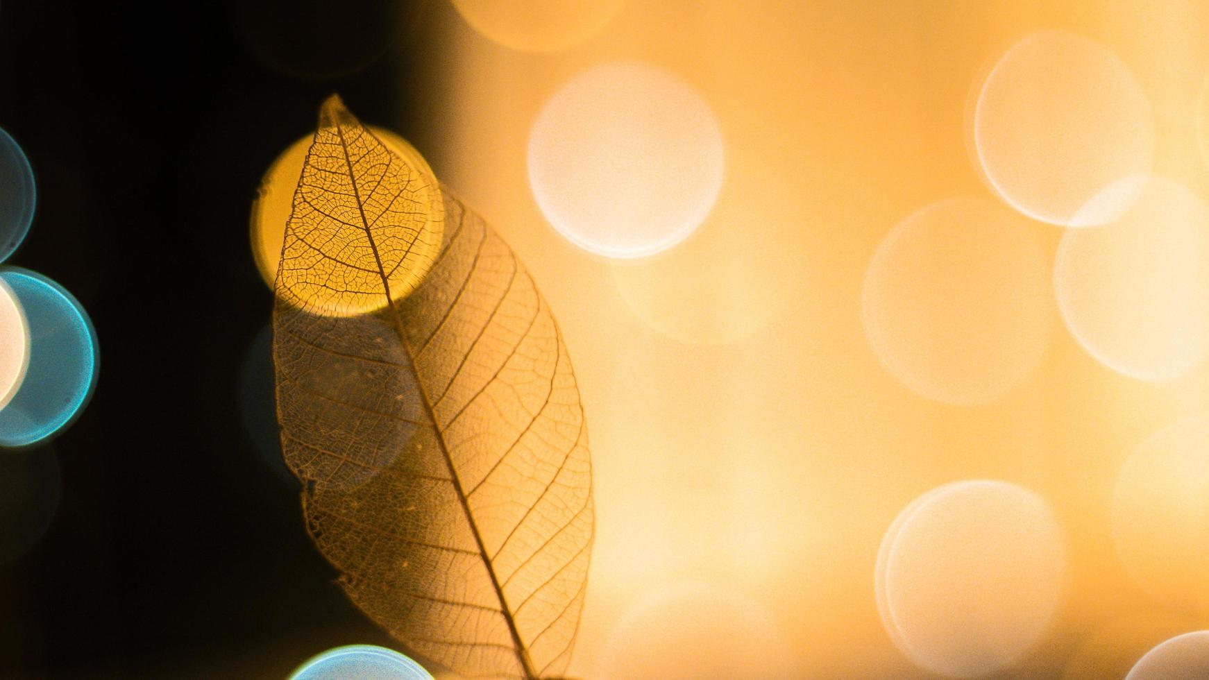 foglia scheletro trasparente con bella trama su uno sfondo luminoso foto