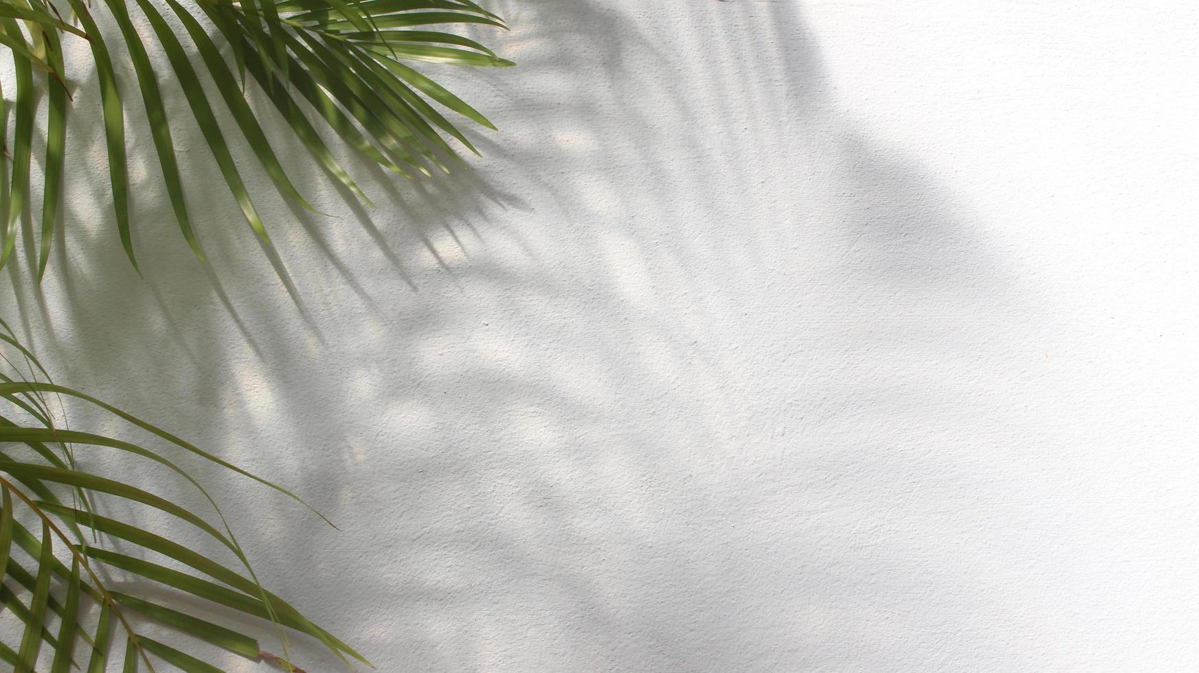 foglie di palma verde con ombra su sfondo bianco foto