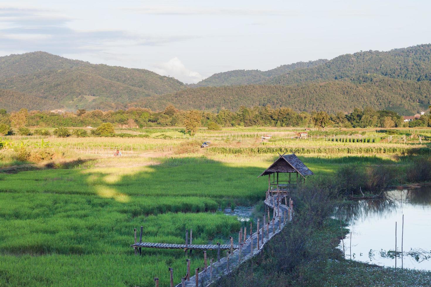 chiang rai, thailandia, 2020 - campo di riso vicino alle montagne foto