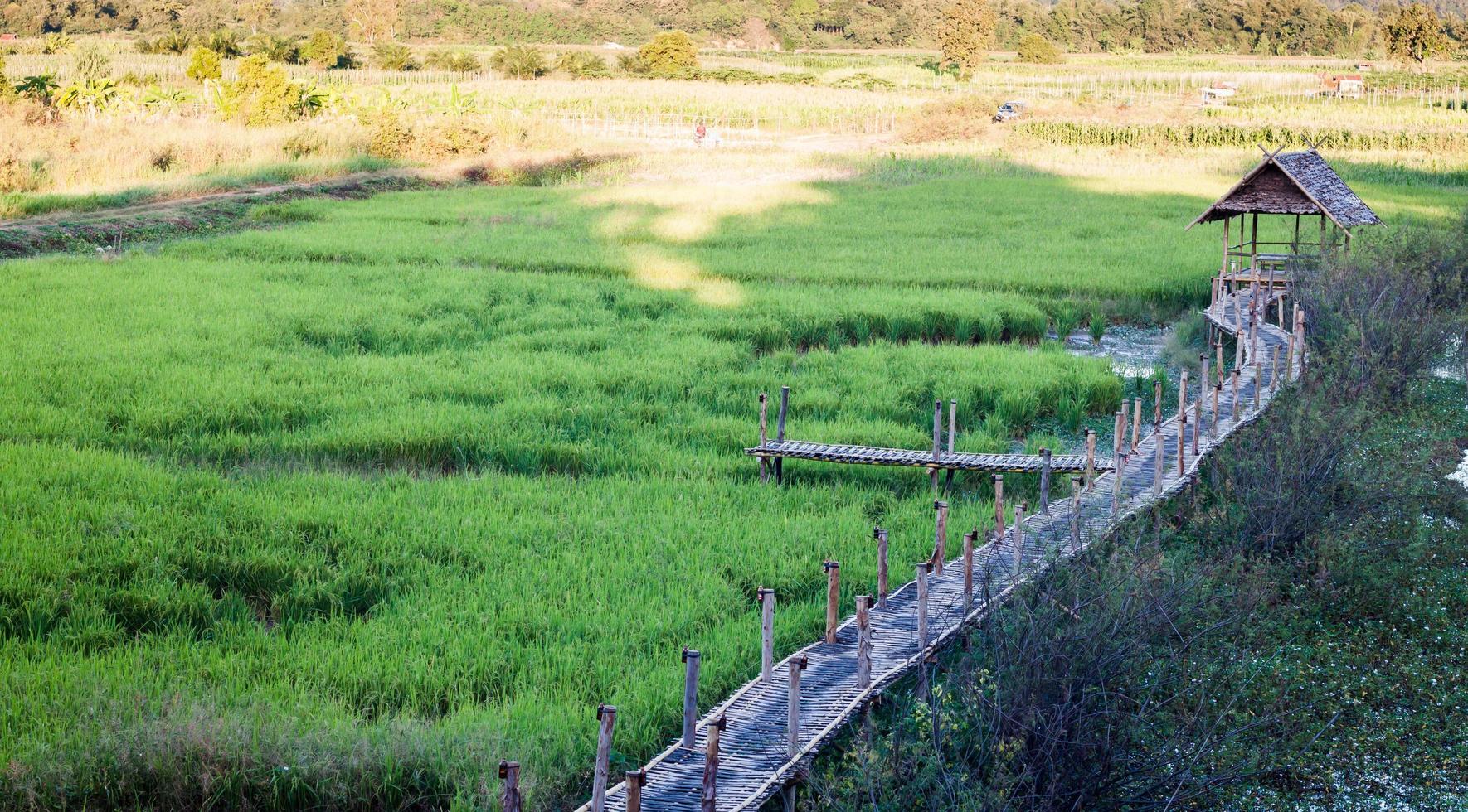 chiang rai, thailandia, 2020 - un campo di riso verde foto