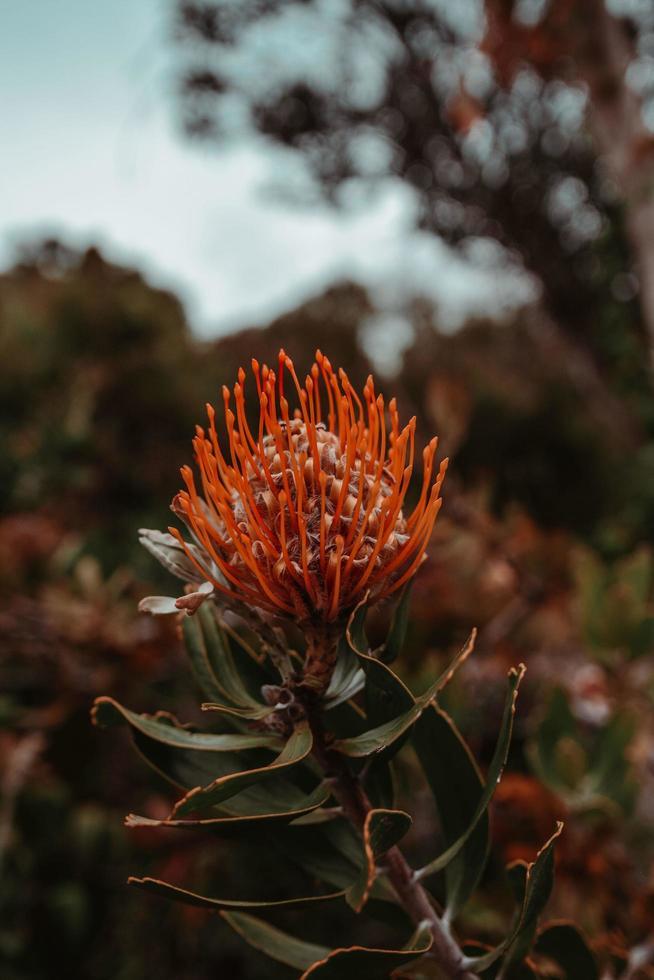 messa a fuoco selettiva fotografia di fiori d'arancio petaled foto