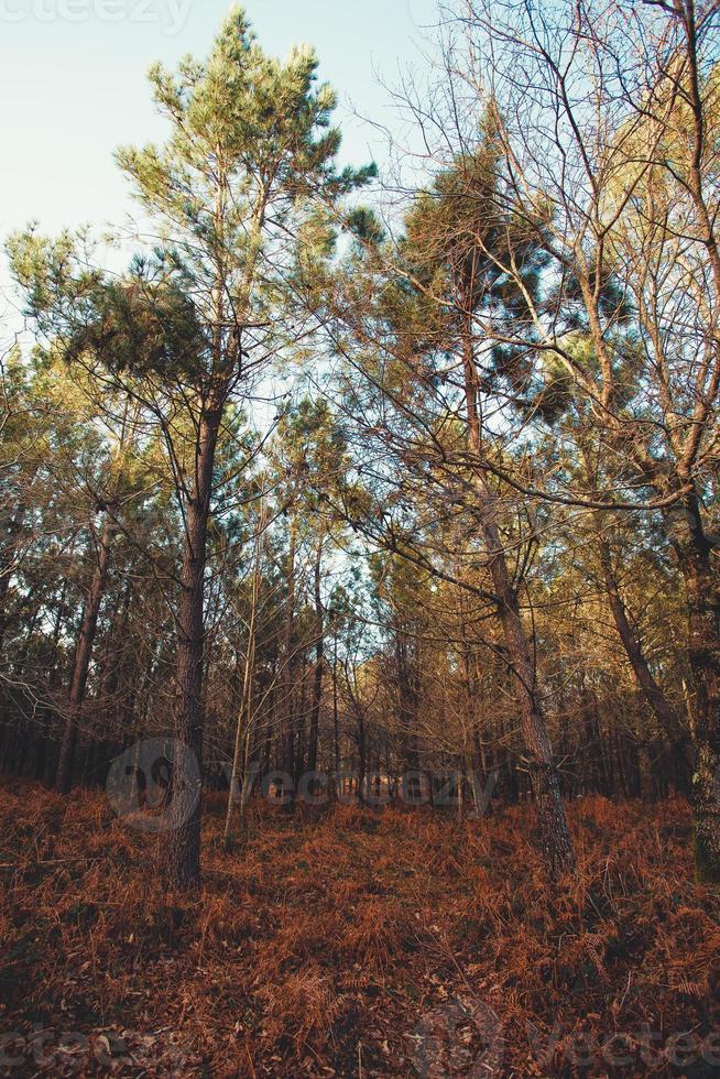 foresta super colorata con cespugli colorati foto