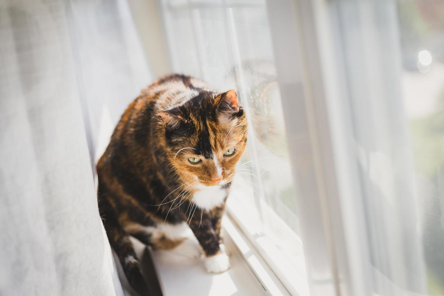 gatto calico vicino a una finestra foto
