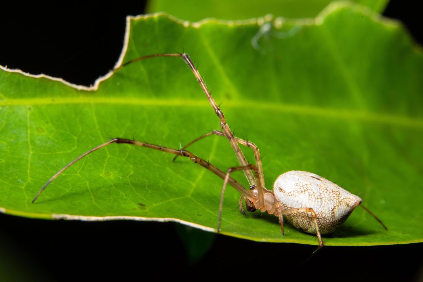 ragno su una foglia foto