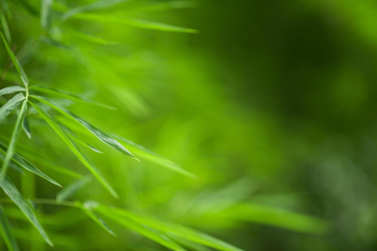 sfondo di bambù verde foto
