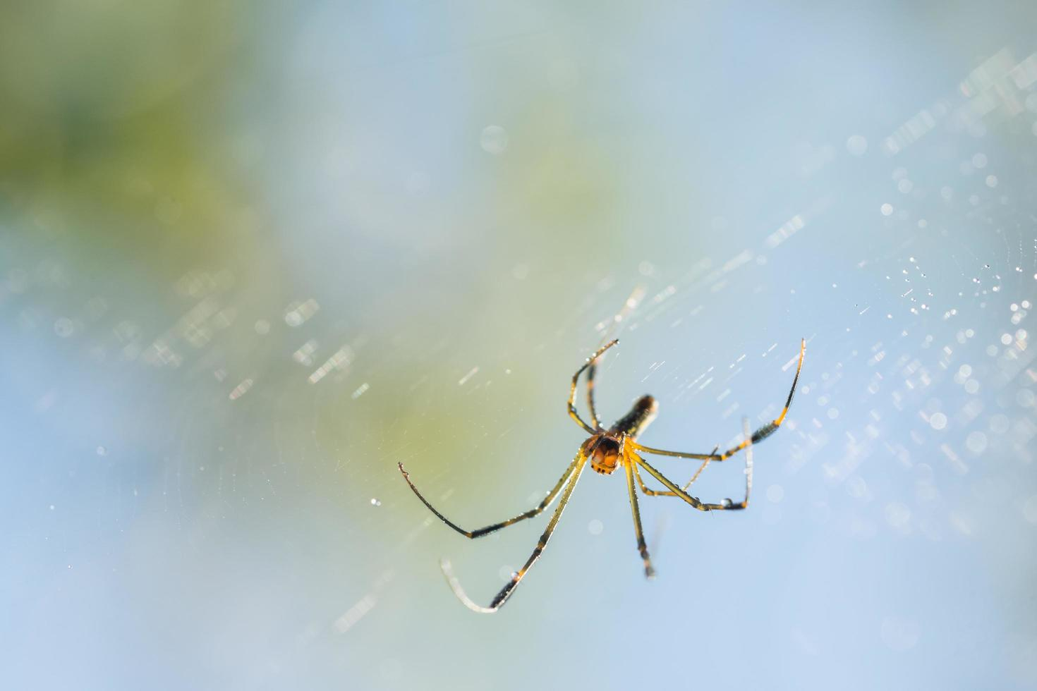 ragno nella ragnatela foto
