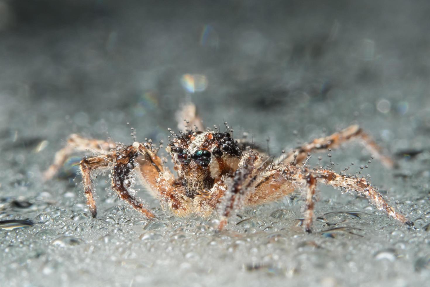 ragno, foto in primo piano