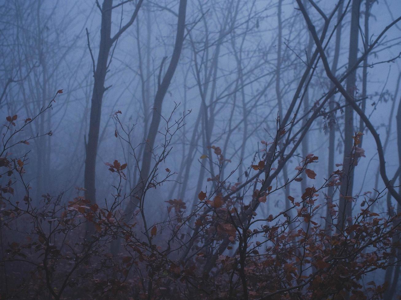 autunno scuro nelle montagne dell'aquila foto