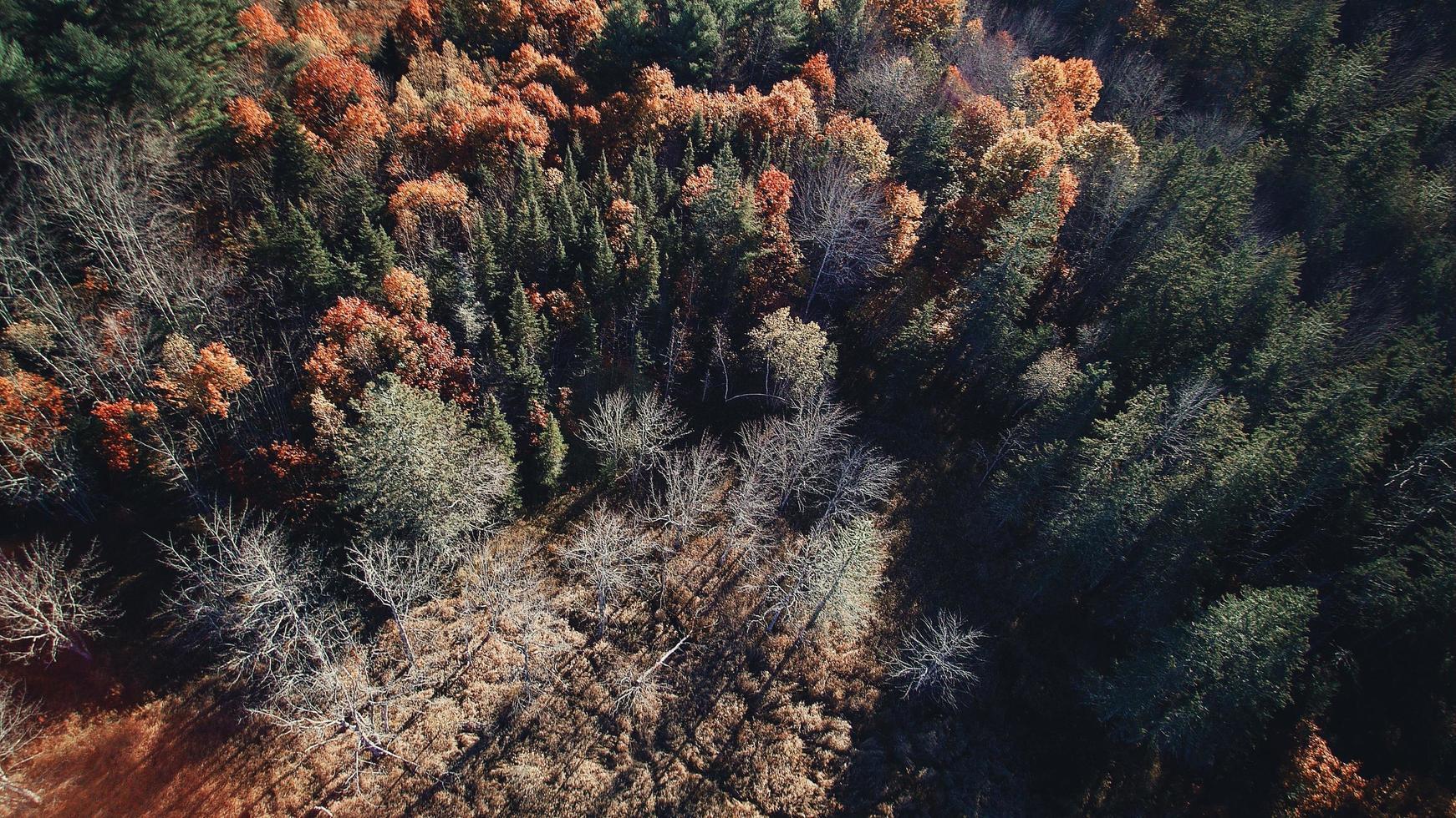vista aerea di alberi d'autunno foto
