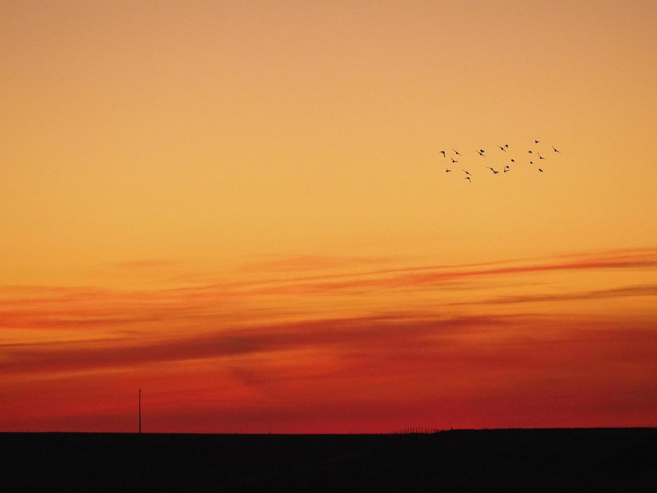 stormo di uccelli al tramonto foto