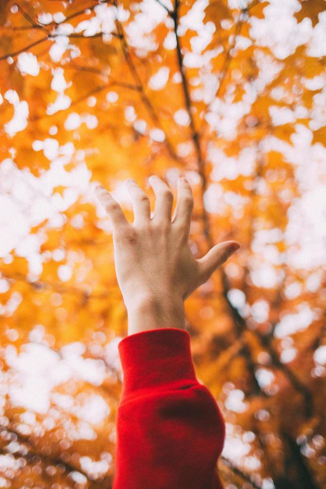 mano contro foglie gialle foto