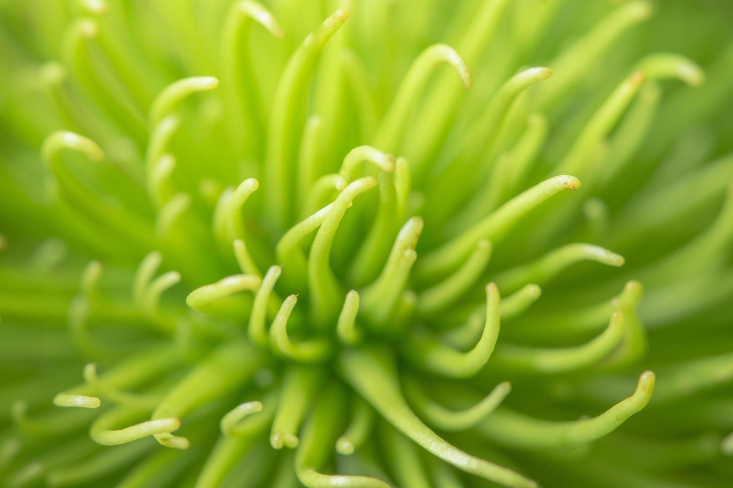 sfondo di piante, foto in primo piano