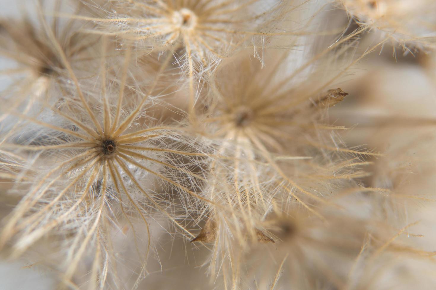 fiore di campo, foto in primo piano