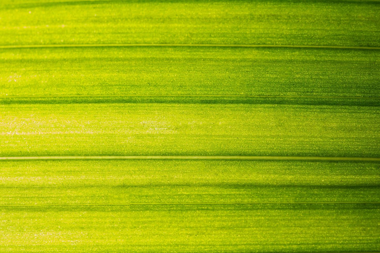modello foglia verde foto
