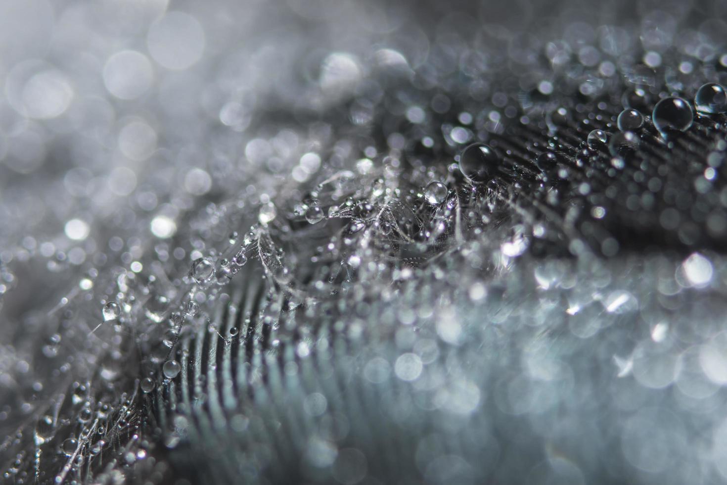 gocce d'acqua su una piuma foto