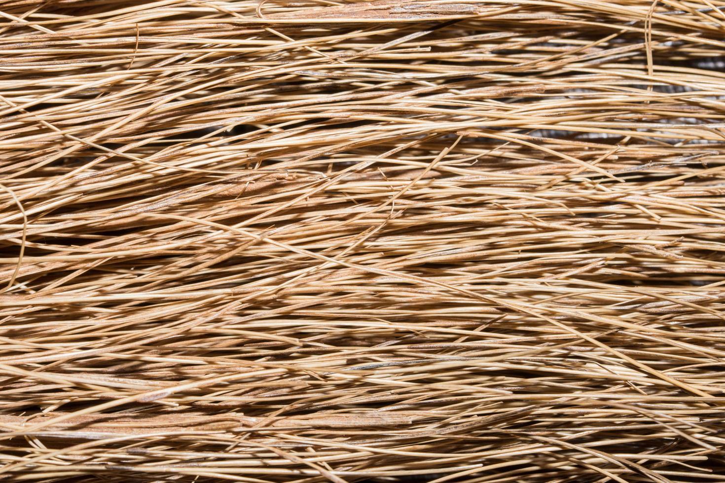 sfondo di erba secca foto
