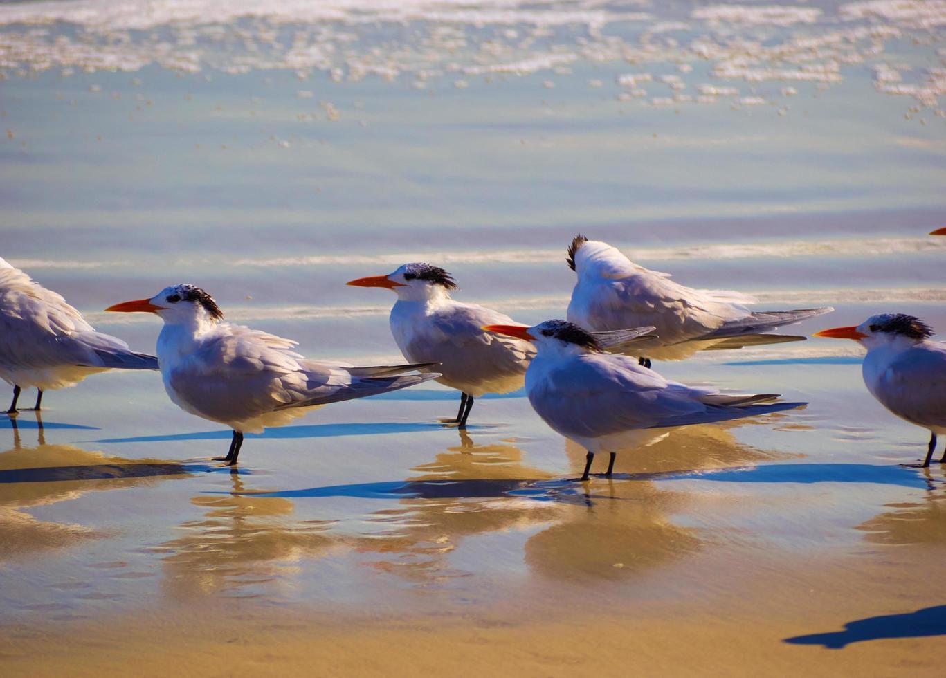 primo piano di uno stormo di uccelli marini foto