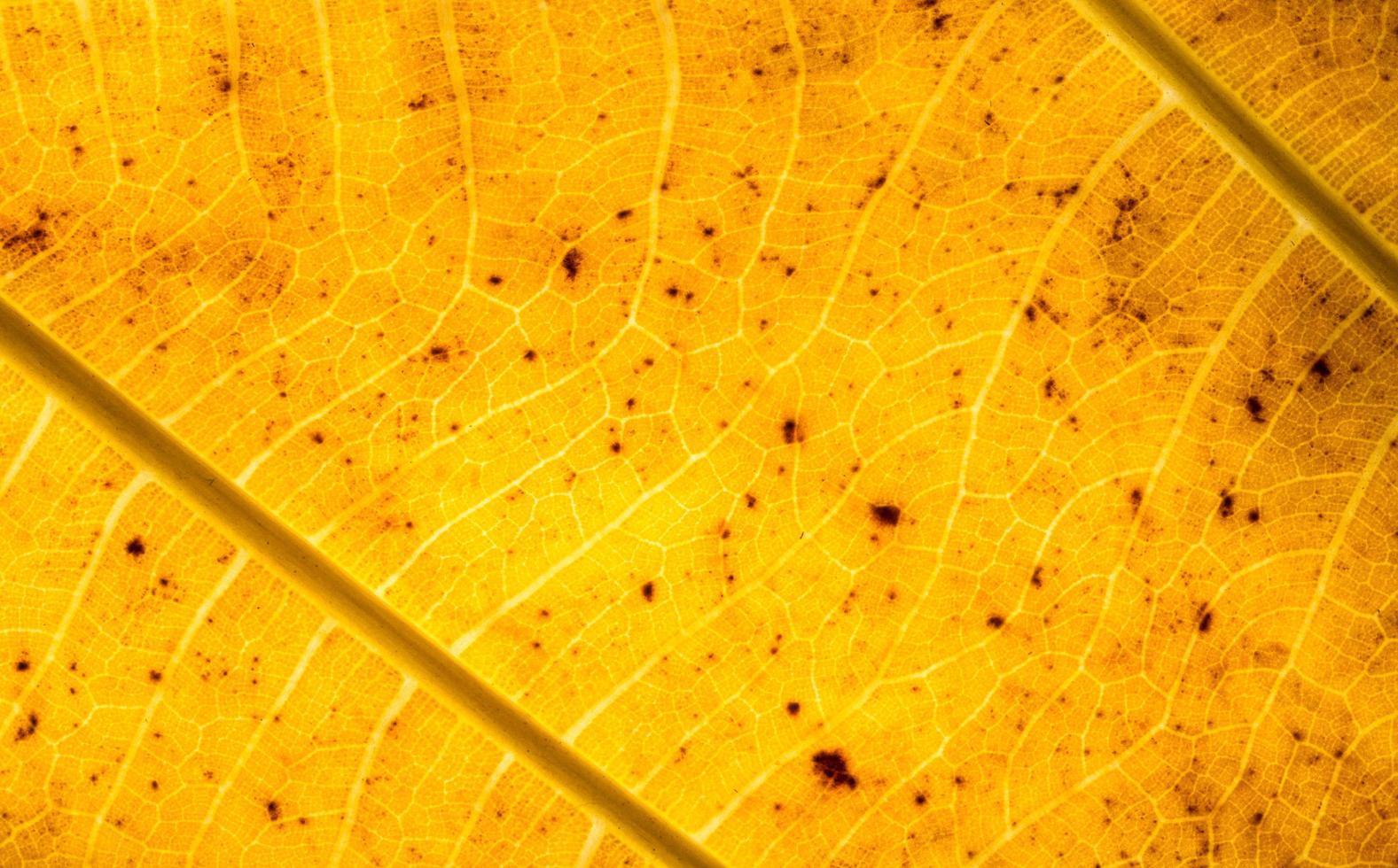 modello foglia gialla foto