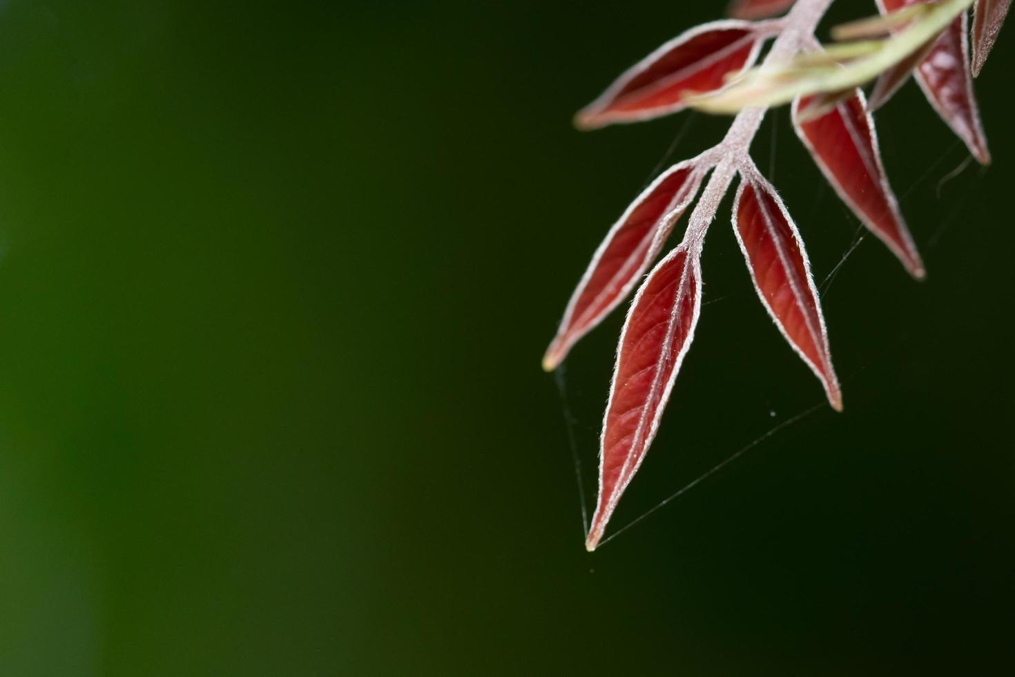 foglie rosse su sfondo verde foto