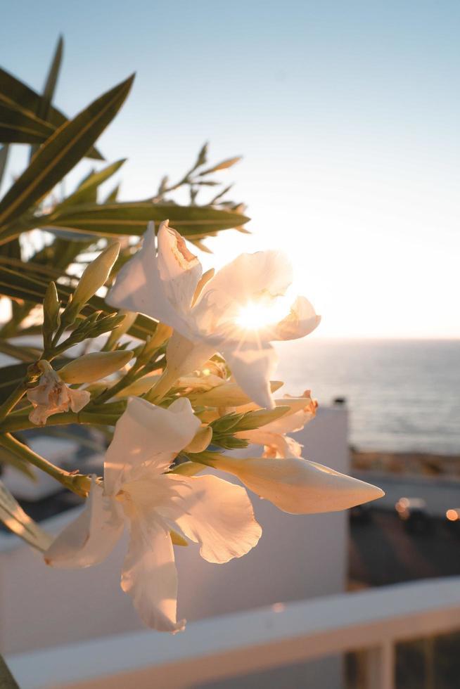 fiori bianchi con foglie foto