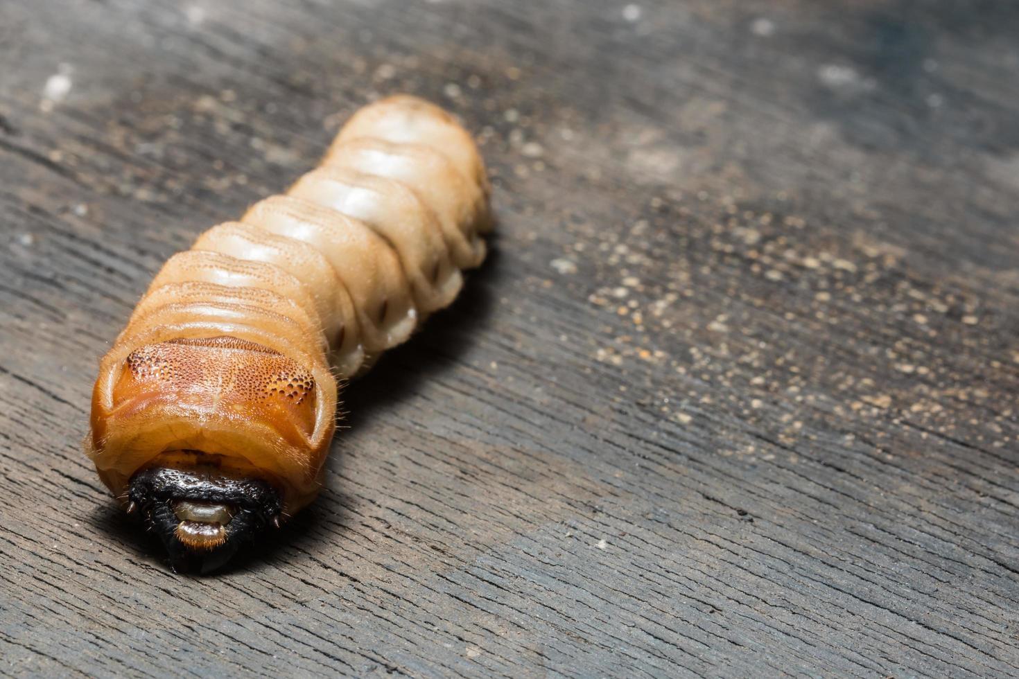 verme su una superficie di legno foto