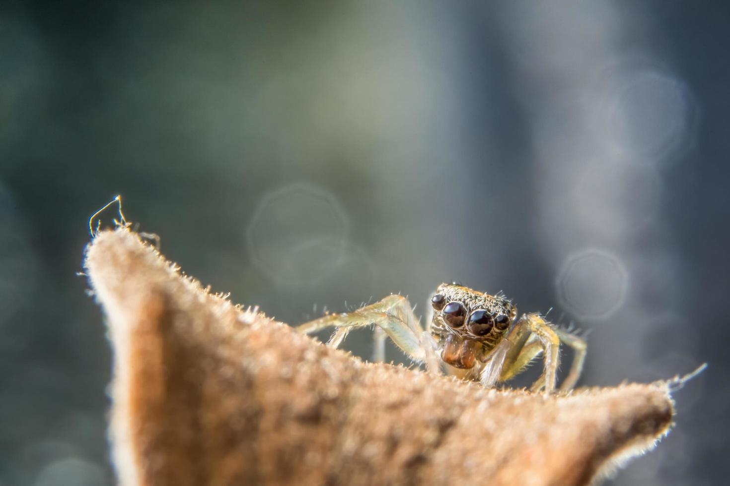 ragno su un ramo foto