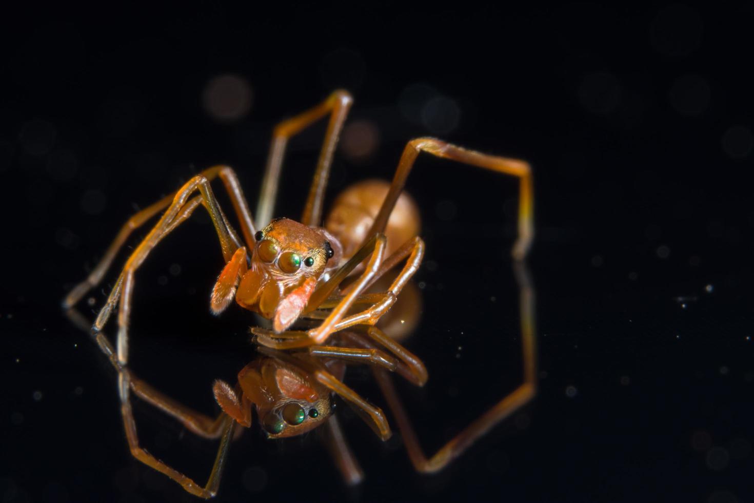 ragno sullo specchio foto
