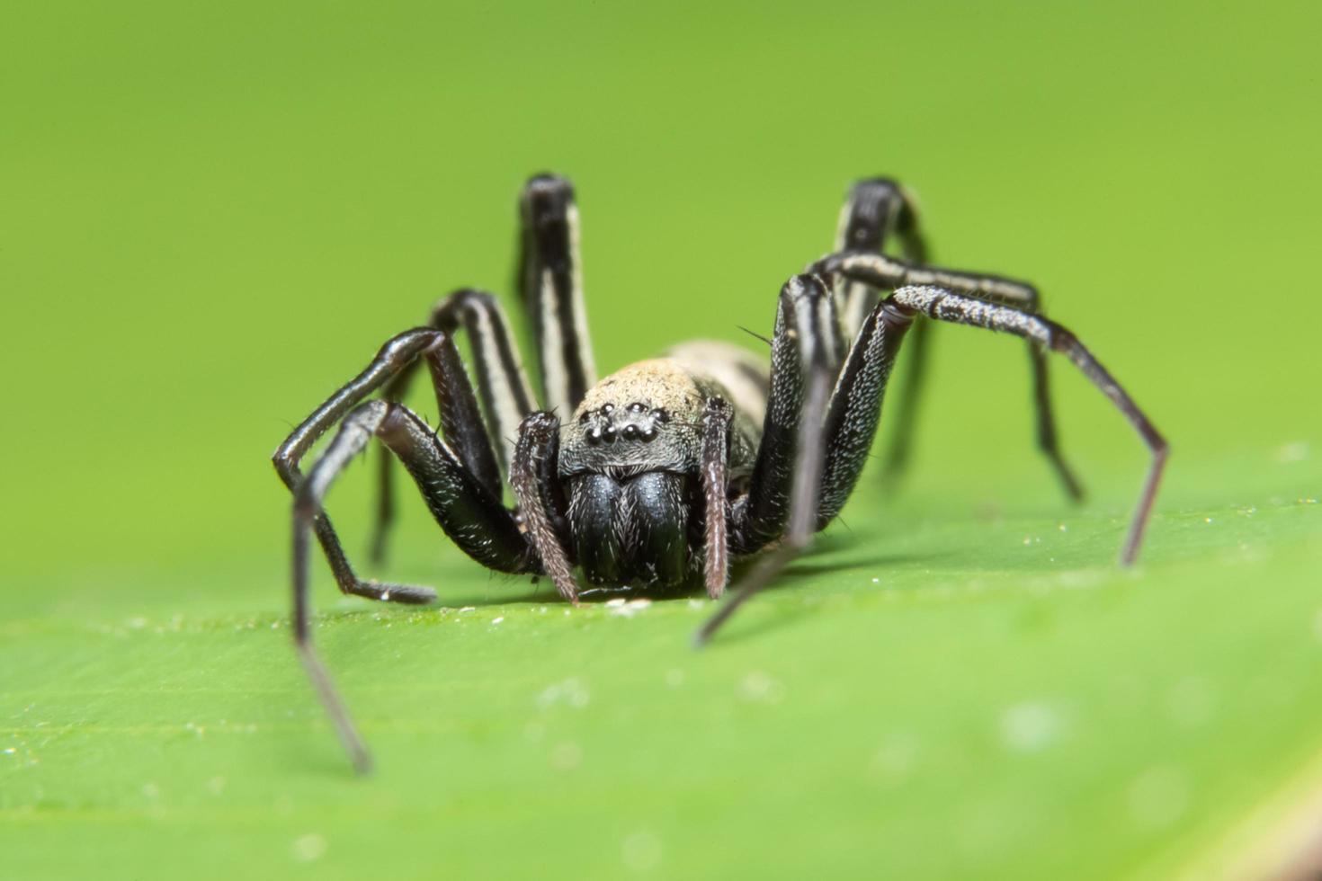 ragno in natura foto