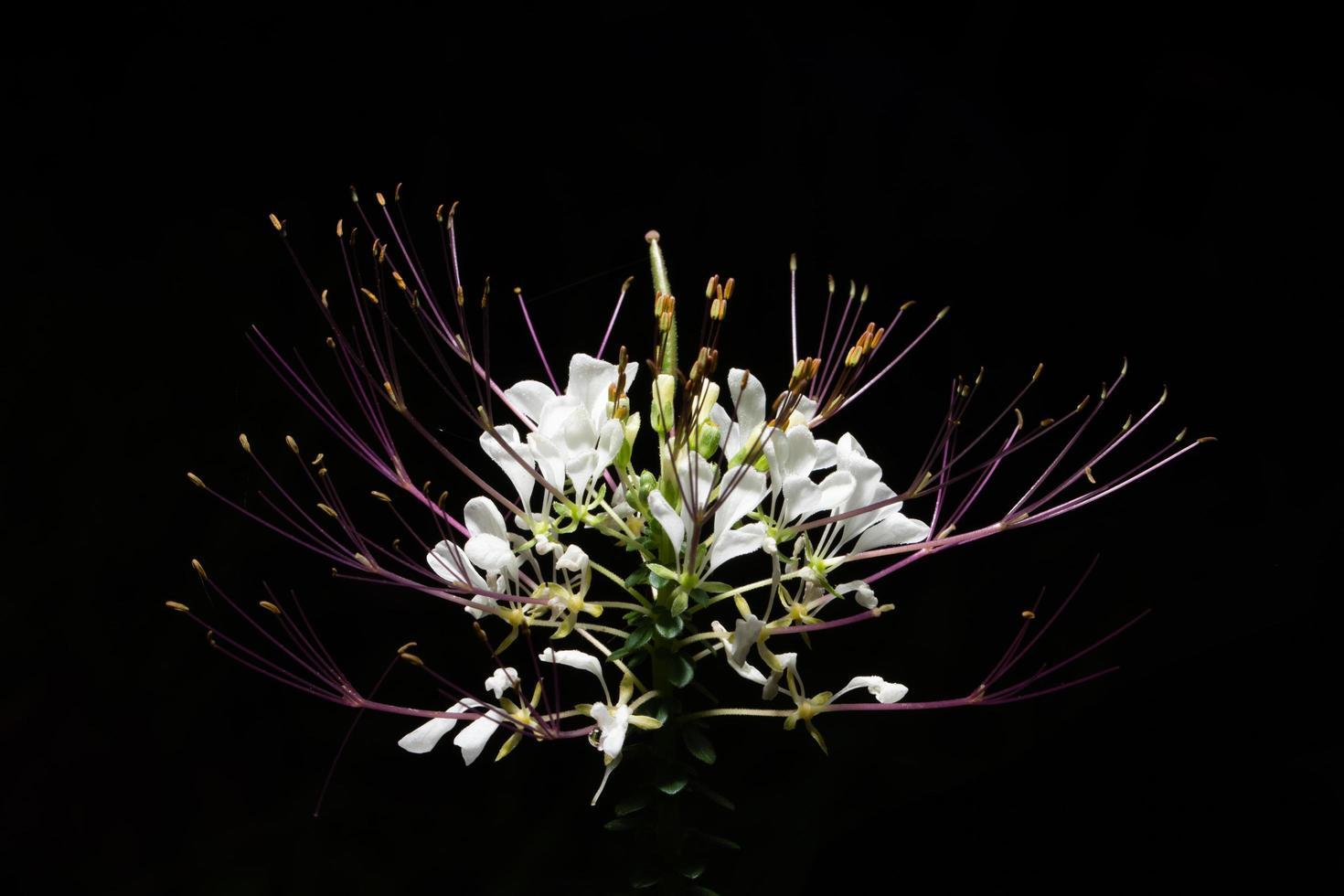 fiore selvatico bianco foto