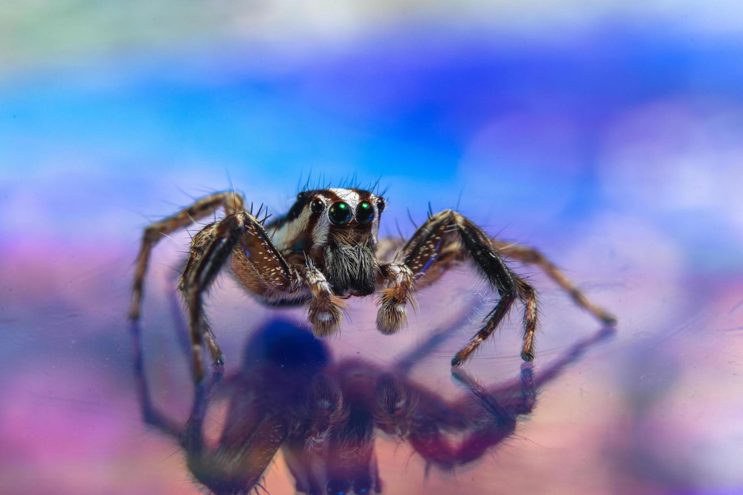 ragno su una superficie riflettente foto