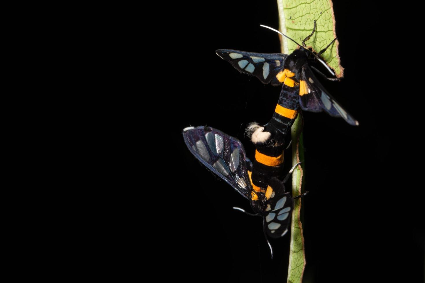 farfalle sulla pianta foto