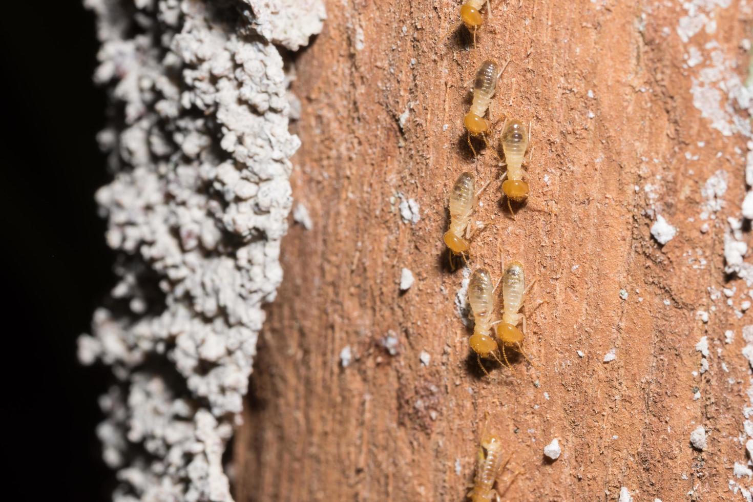 termiti su un registro foto
