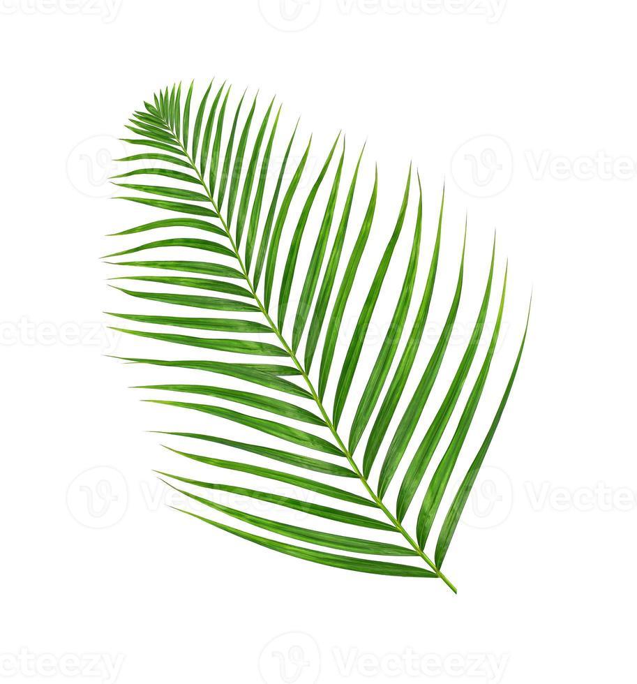 singola foglia di palma foto