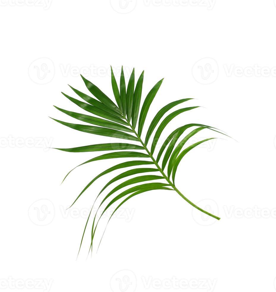 foglia di palma isolata foto