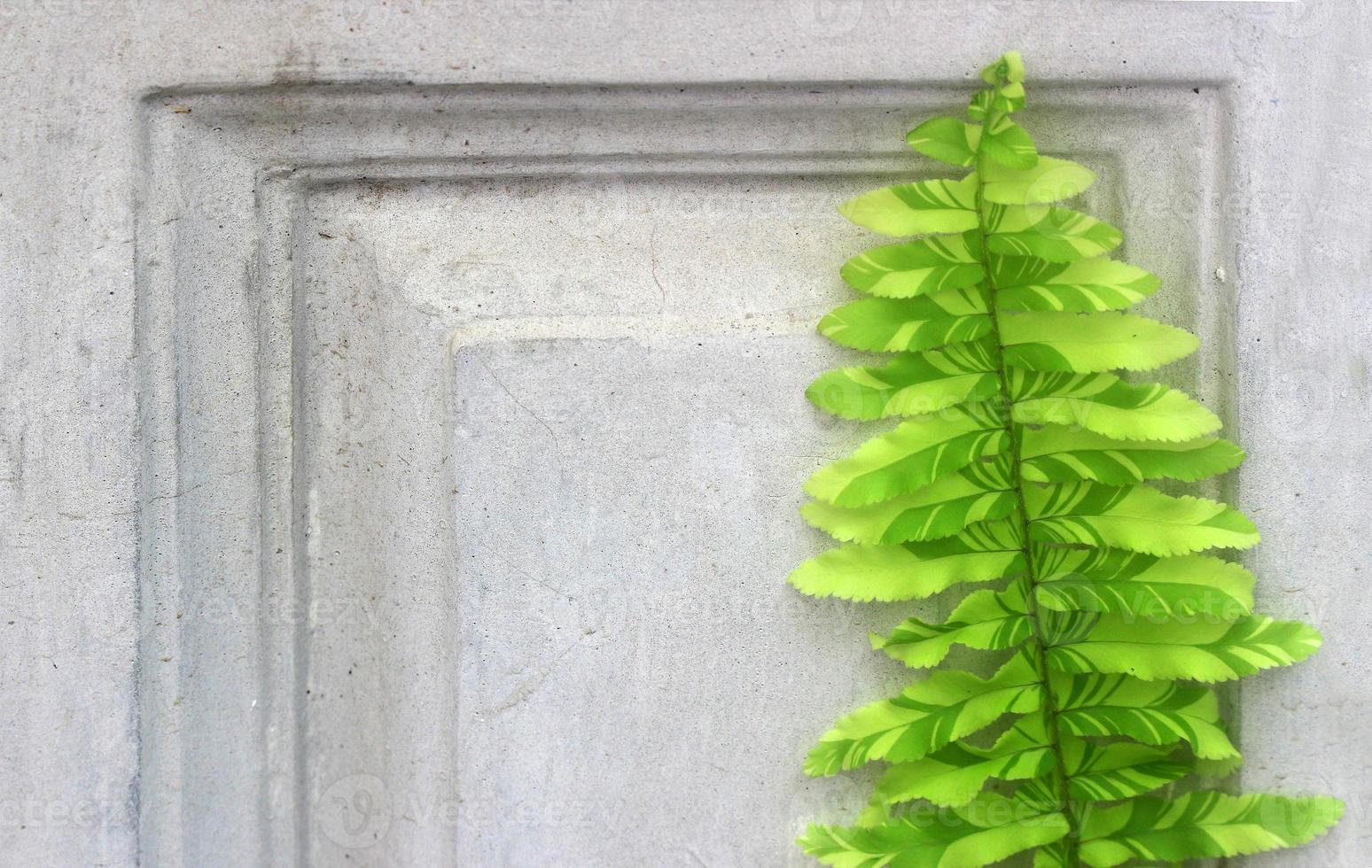 foglie di felce sul muro di cemento foto