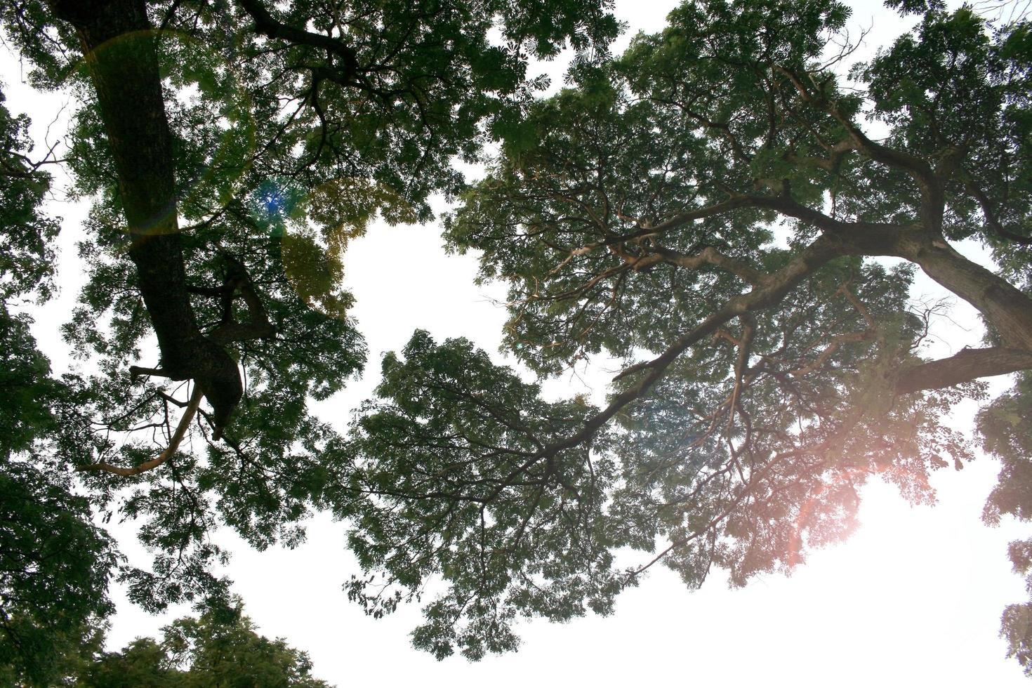 rami spogli di un albero foto