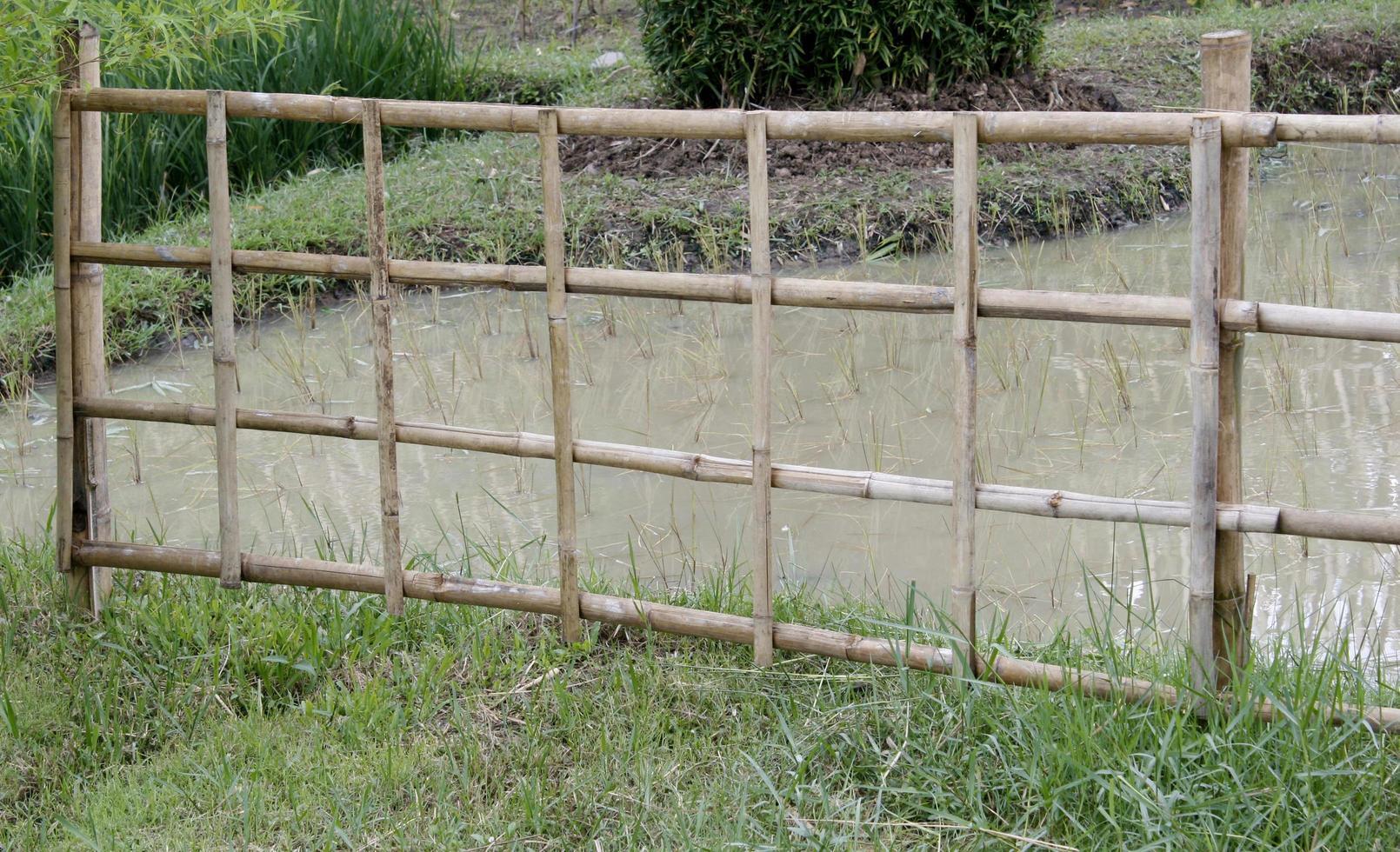 campo di riso con recinzione di bambù foto