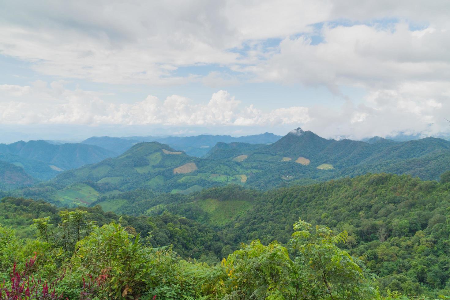 paesaggio forestale in thailandia foto
