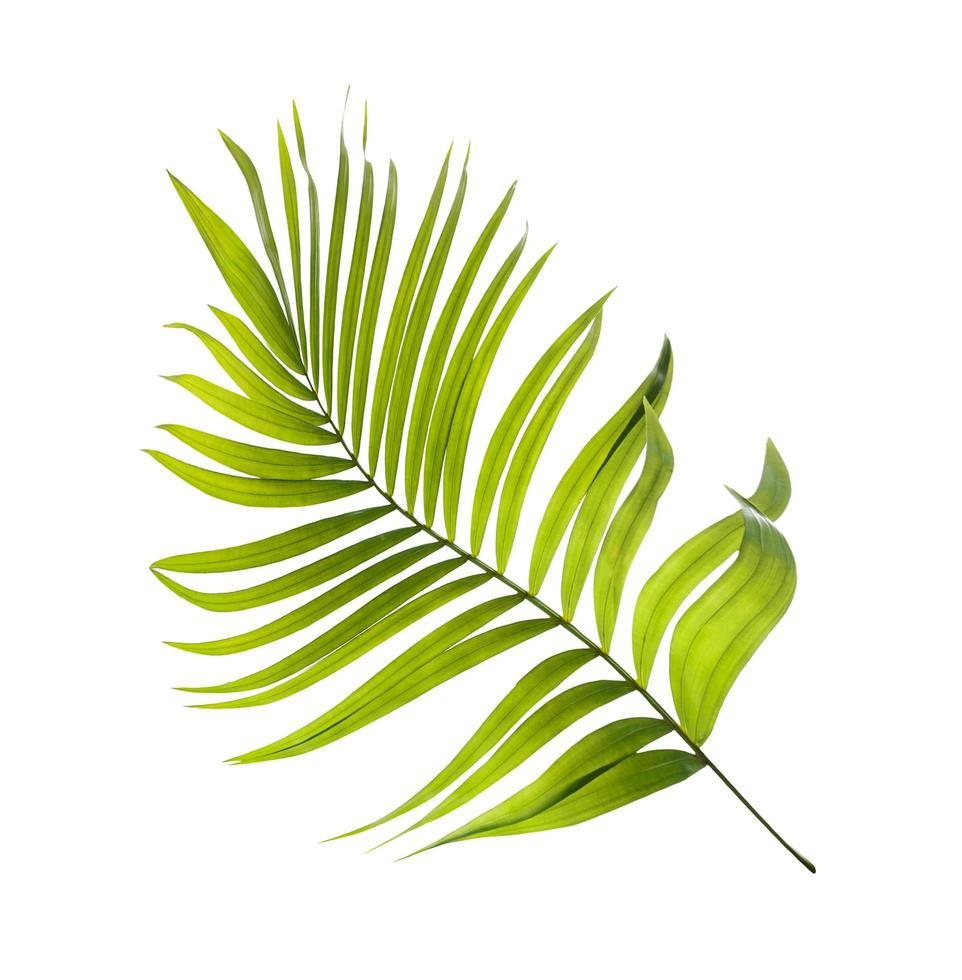 foglia di palma verde brillante foto