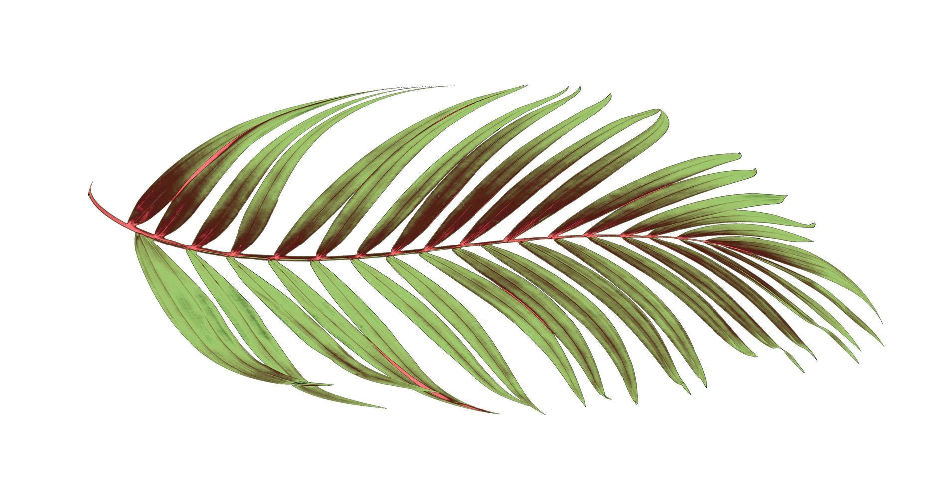 foglia tropicale verde e marrone foto