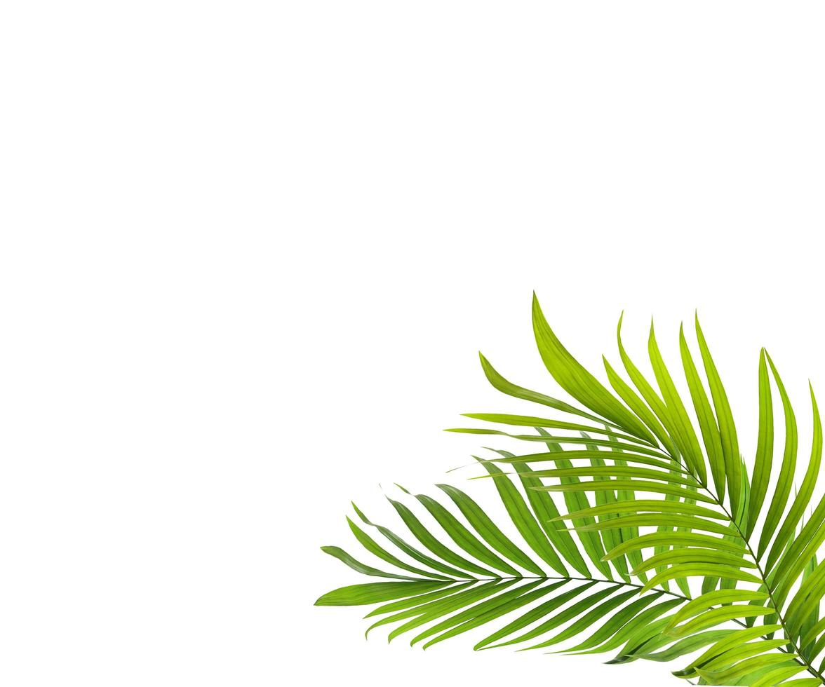 due foglie tropicali foto