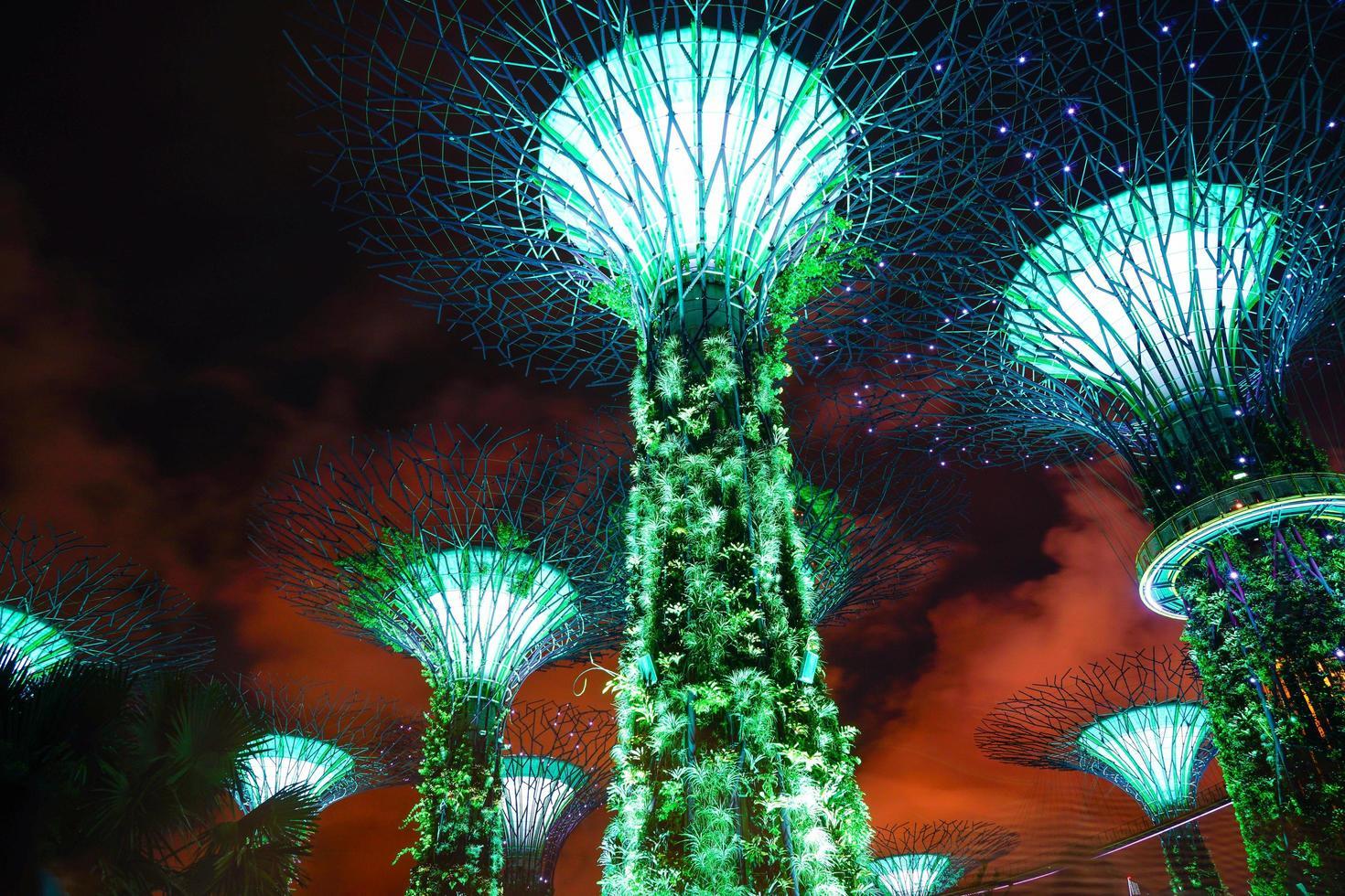 supertrees a singapore durante la notte foto