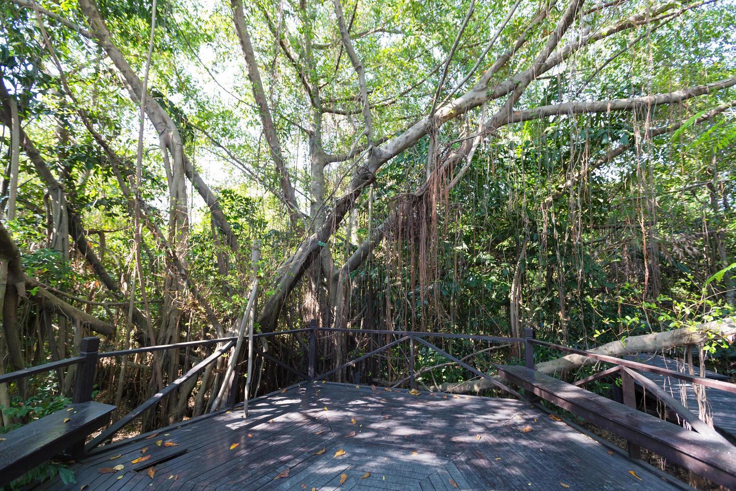 sentiero in legno nel parco foto