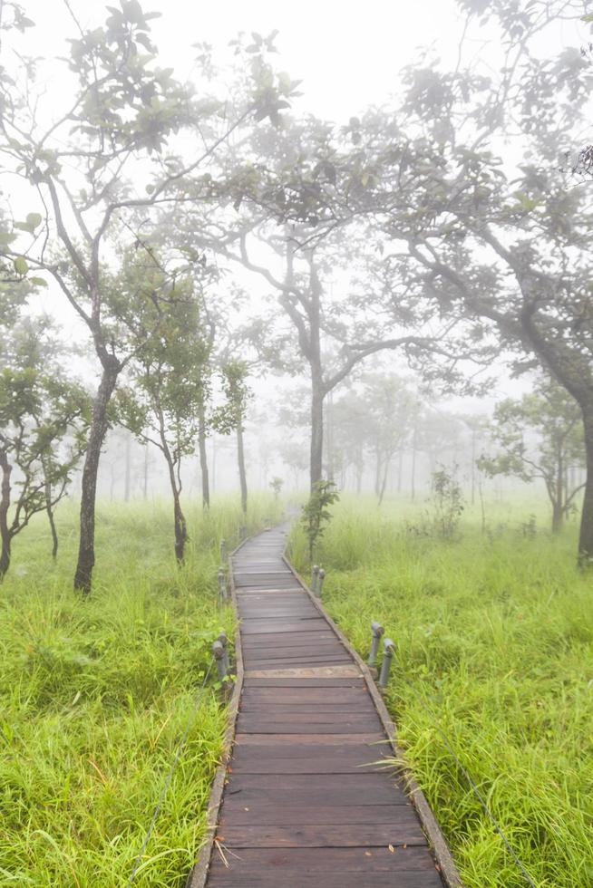 passerella in legno in thailandia foto